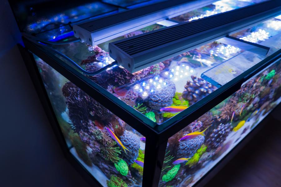 AquaLEDs aquaBAR120 HC+ Reef Blue High Color