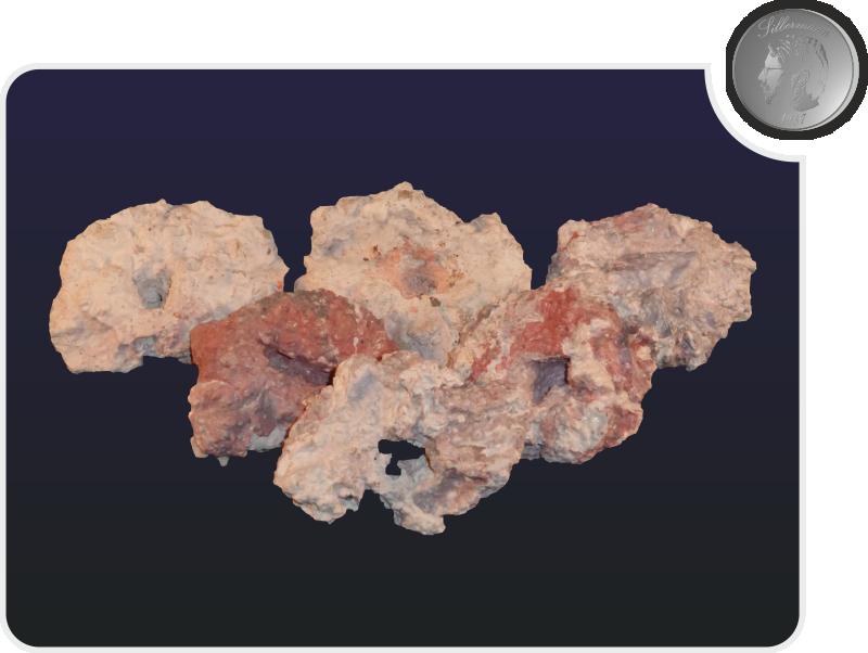 Silbermann Korallenablegersteine bis 70mm farbig