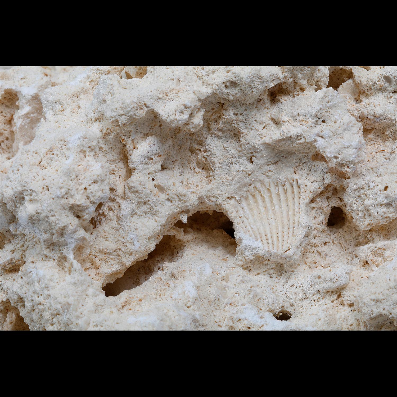 Coralsands Lose Steine, South Seas Base Rock, im Karton 18 kg