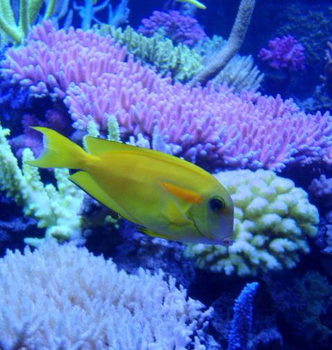 Korallenzucht 24 Watt Coral Light Superblue