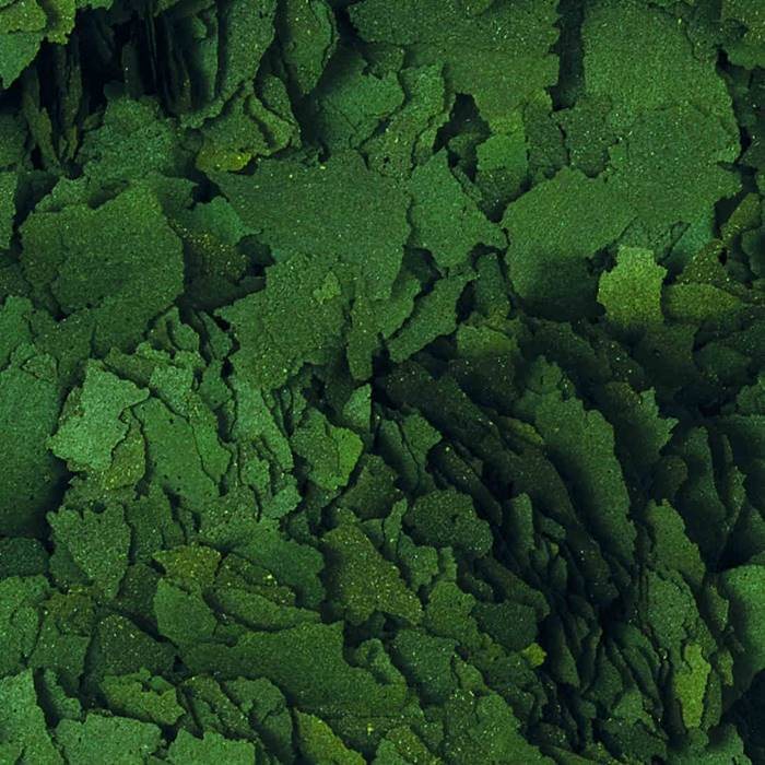 Tropical Super Spirulina Forte 36% Aquarium Futter , 200g Dose