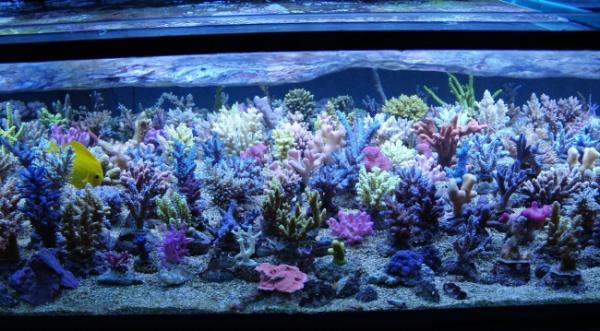 Korallenzucht 24 Watt Coral Light New Generation 14000 K